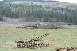Loggers Work Area - Tree Pile
