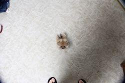 HEY!  Who say's I'm tiny?