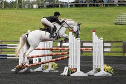 Pepperjack show jumping at Poplar Place HT 2015