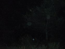 Orbs after Fire Ceremony