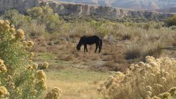 The highlight of the trip! Seeing wild horses in the wild!