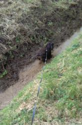 Loving running in the muddy ditch!