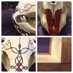 Beaver Skull detail shots