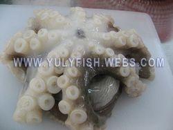 Octopus Vietnam