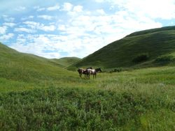 horses in the hills