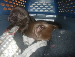 Pups in kennel all laid back