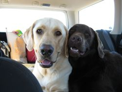 Seamus and Luna on a road trip the following summer