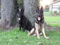 Raven and Kako