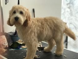 Yippee, another fab haircut, my owners will love it.