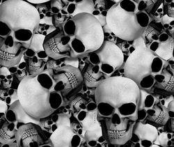WTP 445 Skullz
