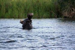 Zambezi River Cruise - Zimbabwe