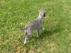 Cash movement at 8 weeks old