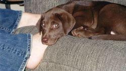 Stella finds a home, 2004