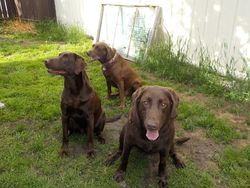 Maggie, Dixie and Grace