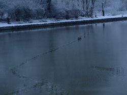 Duck track