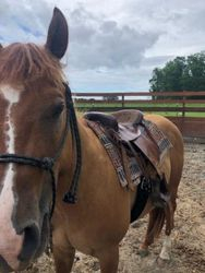 First day with a saddle