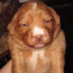 Puppy 1 - Girl