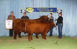 Reserve Grand Champion Cow/Calf