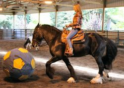 "Erica O' Conner (Intern) riding ""Tag"" (Gypsy Vanner)"
