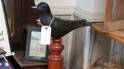 Detailed D. Rhodes Crow