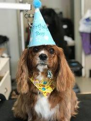 Happy Birthday 8th Birthday Bailey!