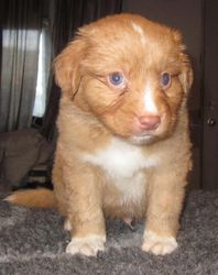 Puppy 7 - 4.5 weeks