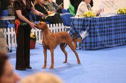 Fudge at Top Dog of Scotland