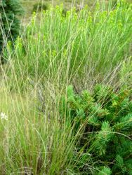 meadow edge with spruce sapling