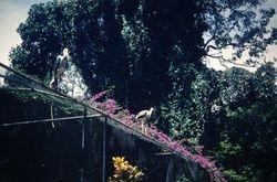 328 Storks landing Colombo
