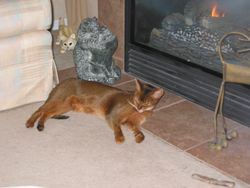 Mischief toasting in front of the fireplace!