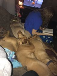Red Dog Snuggle Time
