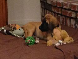 Lucy and all of her toys ...