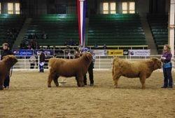 Intermediate Heifer Calf Class