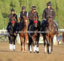 O'Neill Stablemates