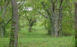A Springtime walk IV