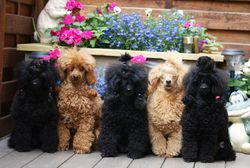 Alina, Bailey, Stina, Melina o Amina