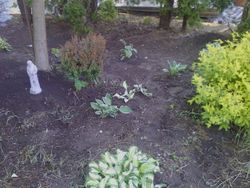 after removal of weeds