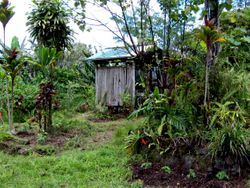 Rustic jungle life