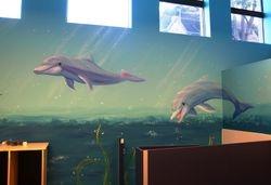 UNDERWATER  dancing dolphins