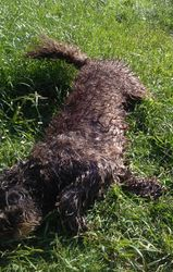 I had a mud bath but nooo the humans made me have another bath!