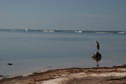 Heron on Merritt Island