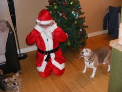 readjusting after all those kisses for Santa!