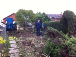 Clearing the orchard area