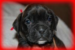 Lennox 4 weeks