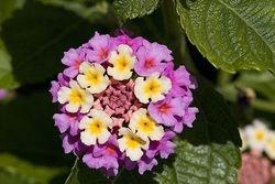 Multi-tier Bloom