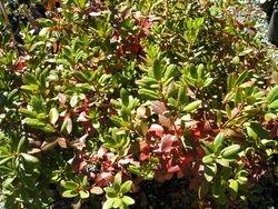 fall colour on rhodos