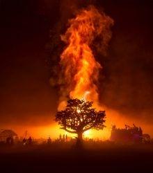 evil  tree burn