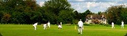 Generic Cricket