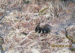 A Bear We Let Go