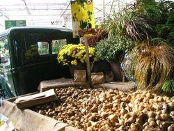 it's a truckload of Daffodil Bulbs!